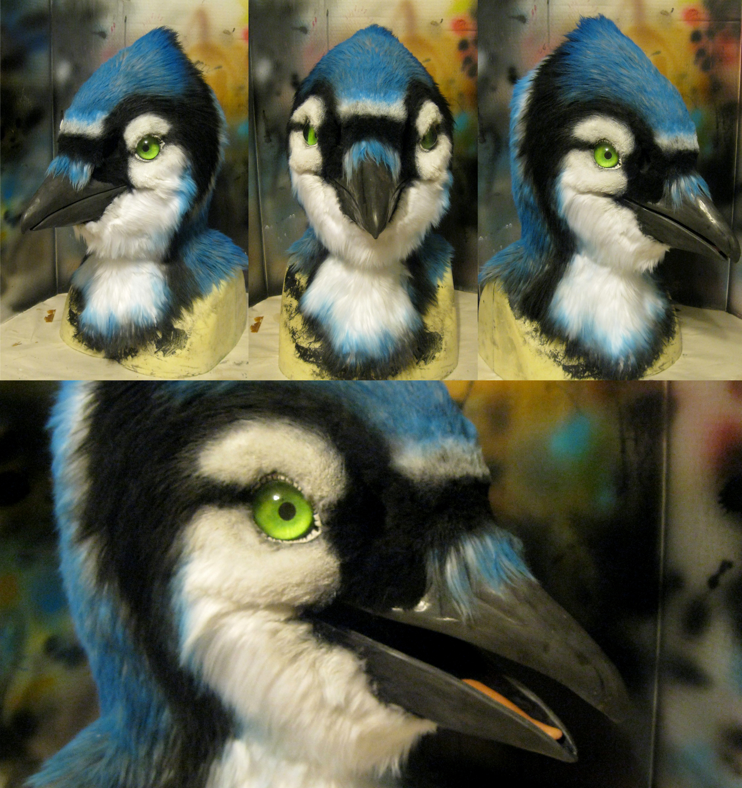 Bluejay With Different Eyes!
