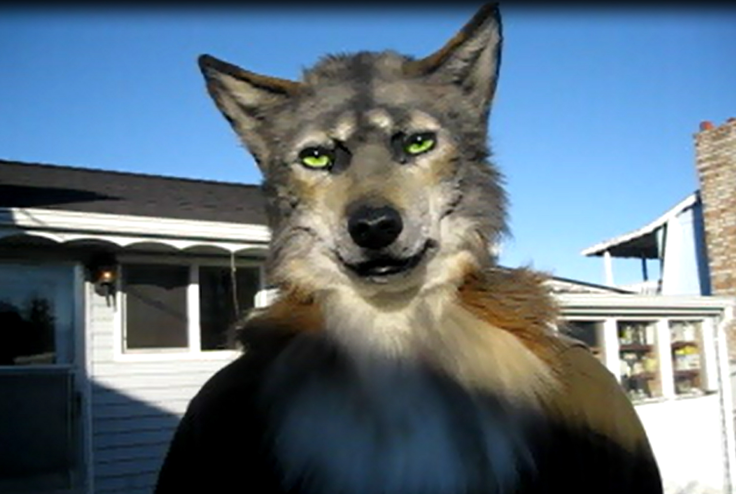 cute shot of wolf/coyote mask