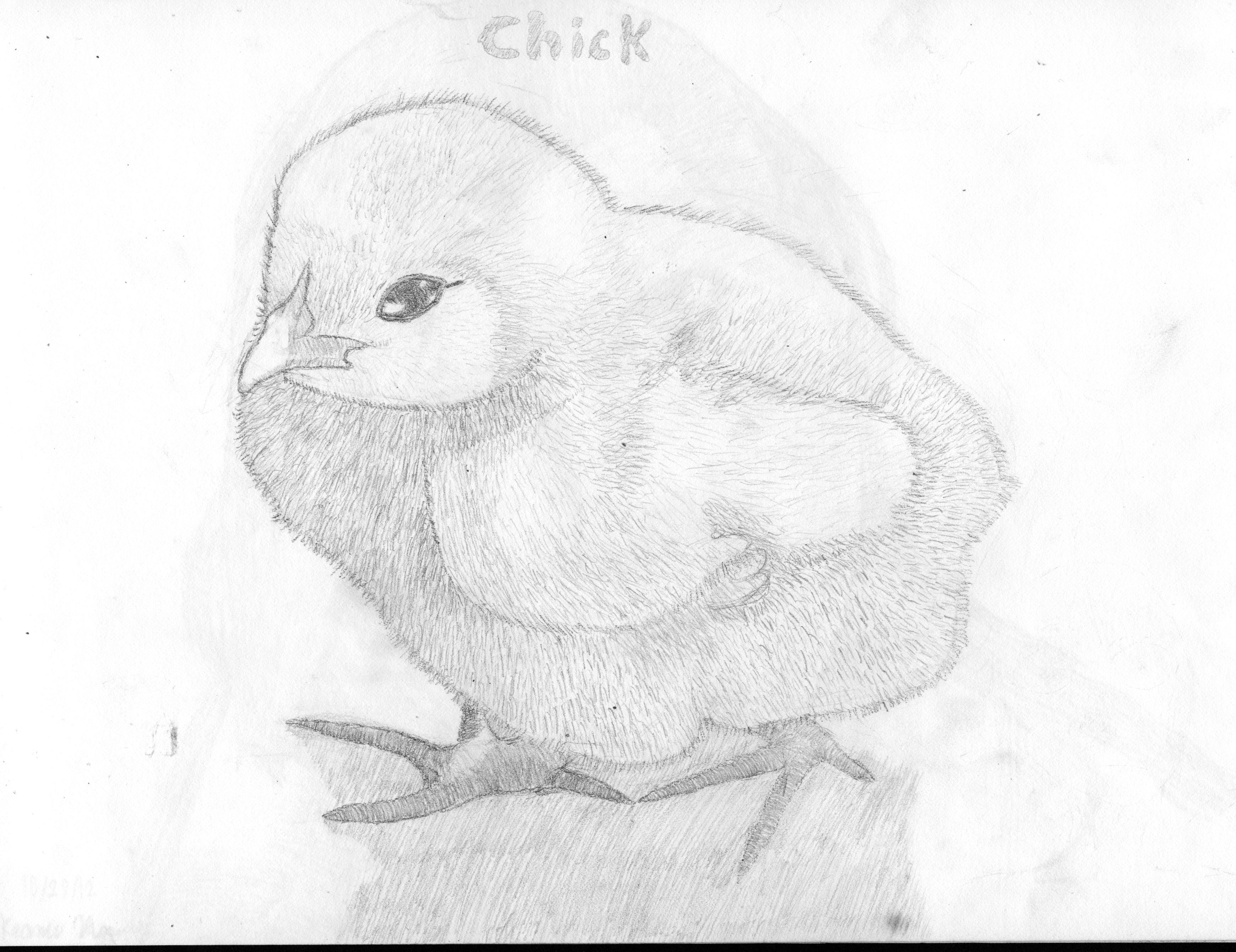 цыпленок картинка карандашом