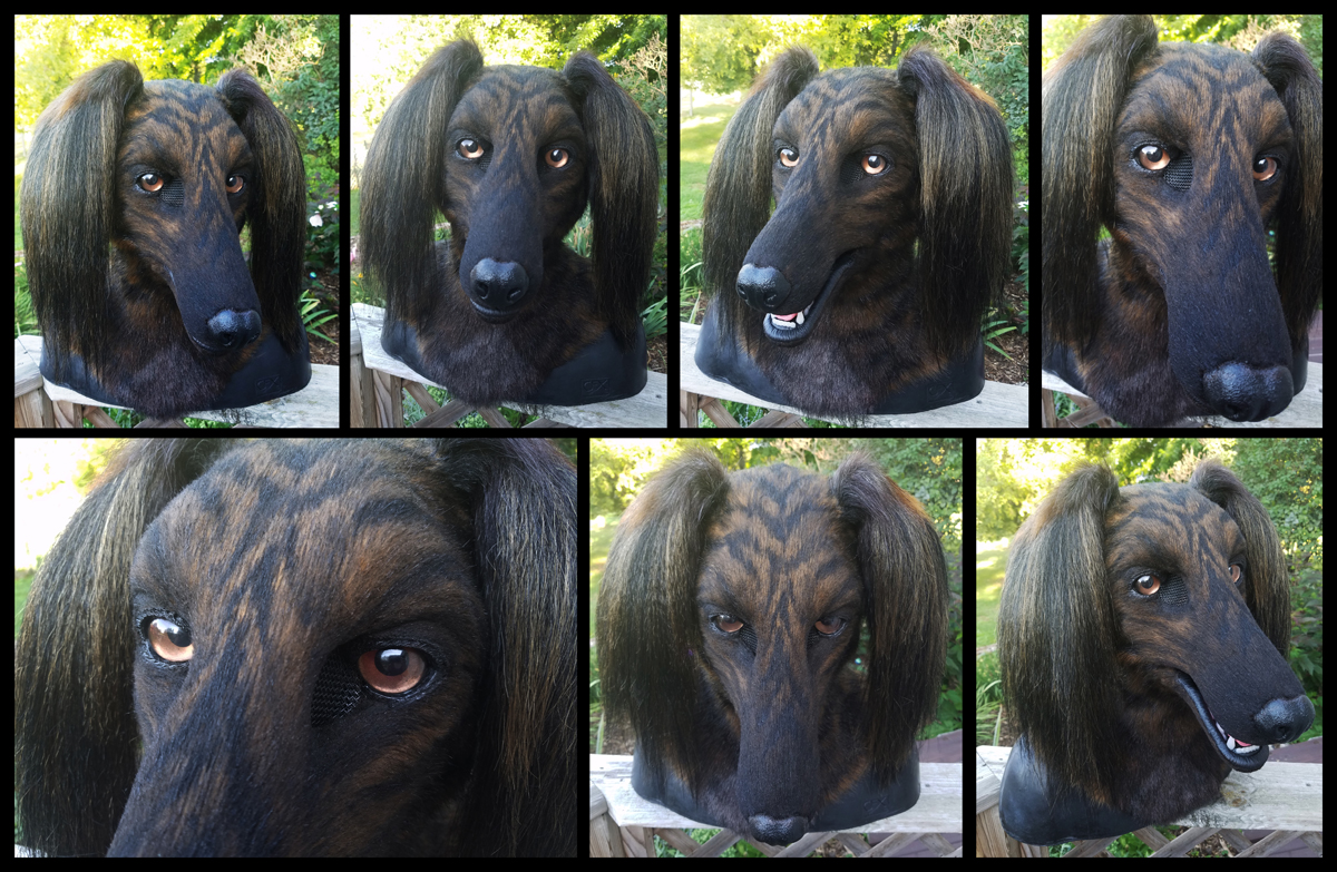 Brindle Saluki {{FOR SALE — Weasyl