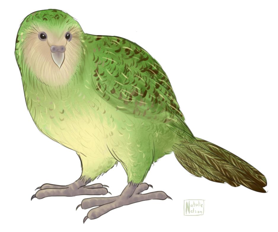 Kakapo — Weasyl