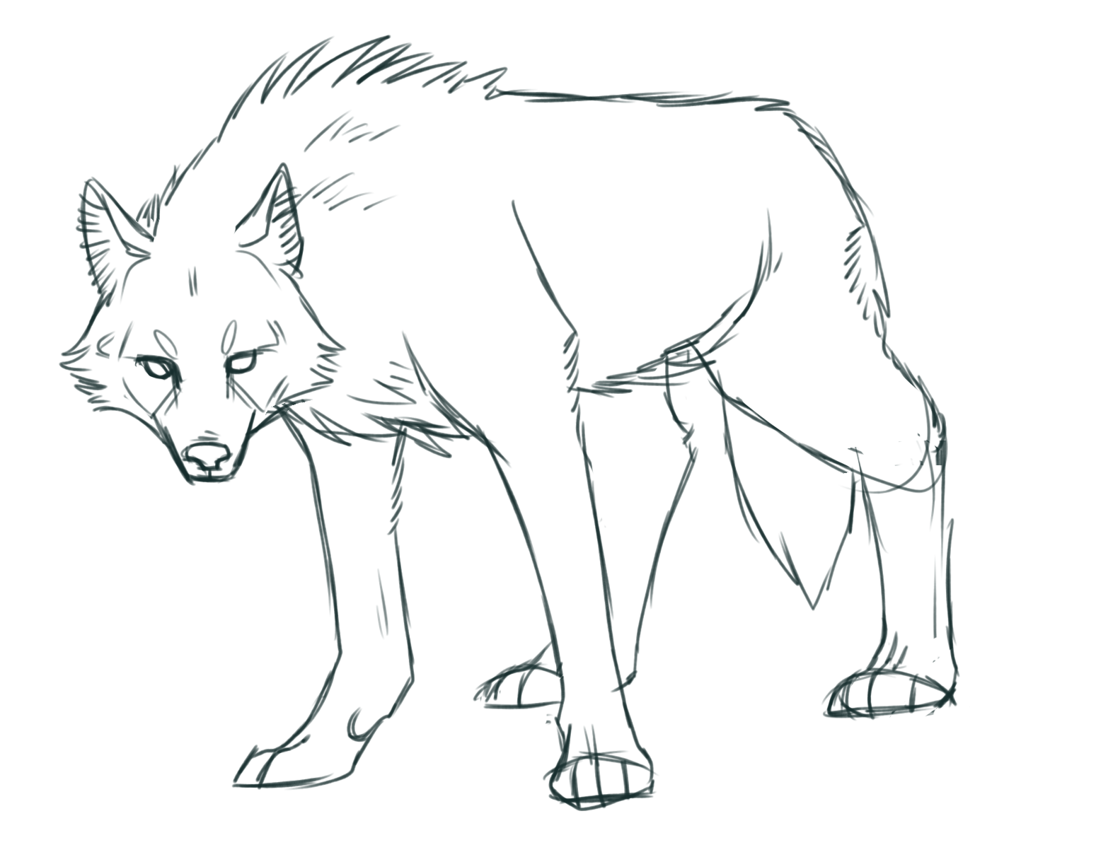 wolf front poses - HD1549×1195