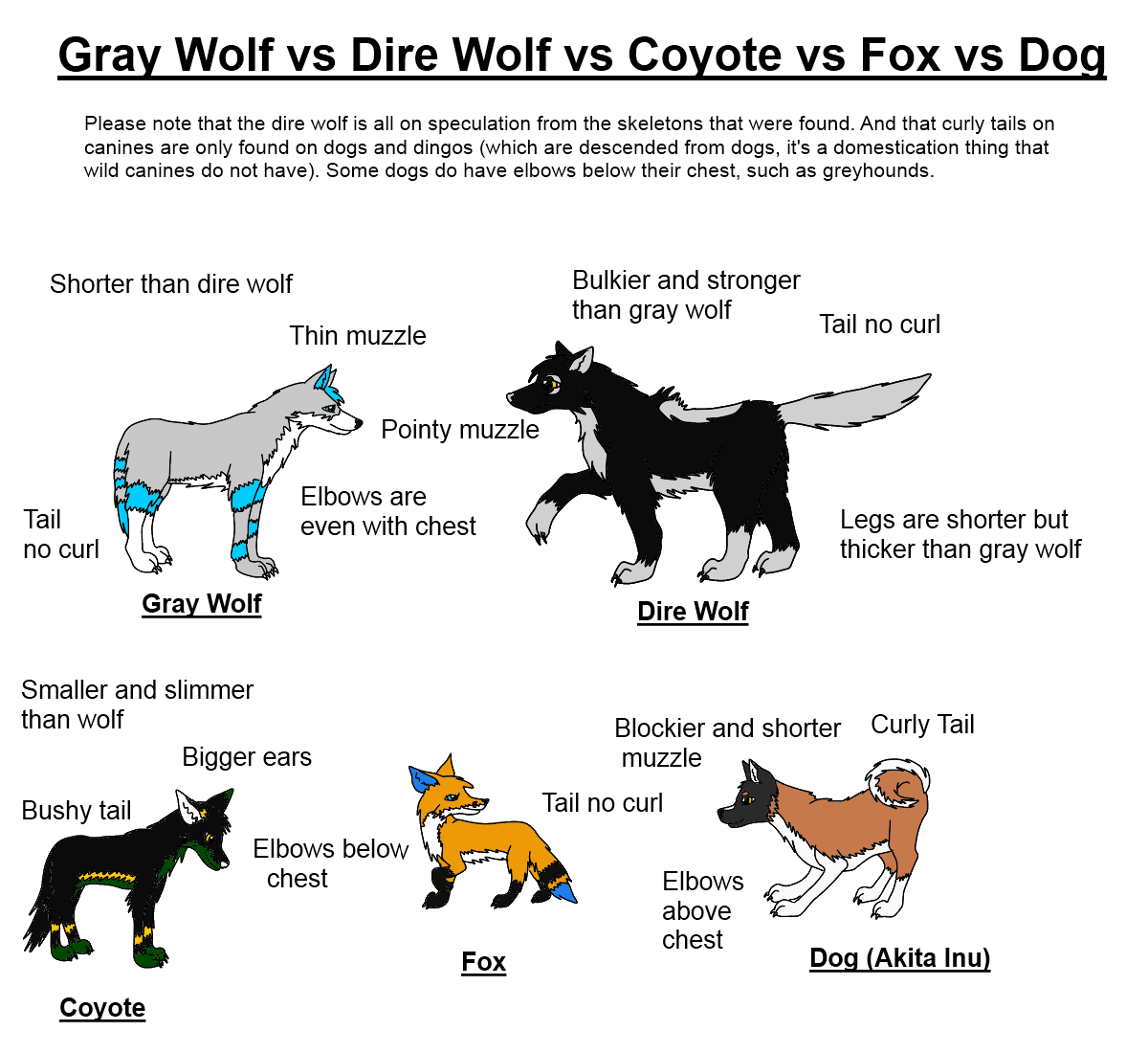Difference Between Fox And Coyote: Canine Art: Dire Wolf Vs Gray Wolf Vs Coyote Vs Fox Vs Dog