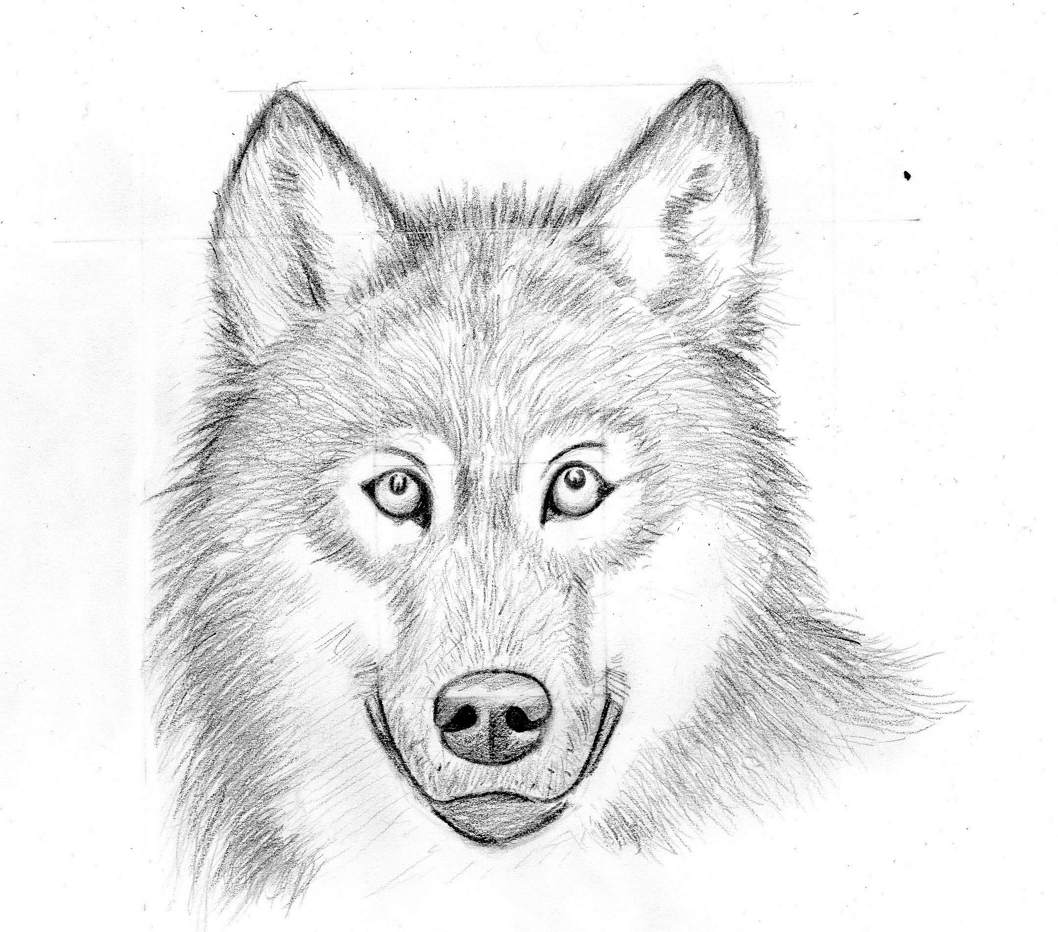 Букеты марта, картинки волка карандашом прикольные