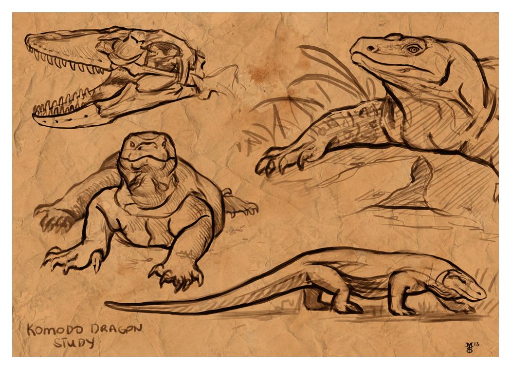 Komodo Dragon Study