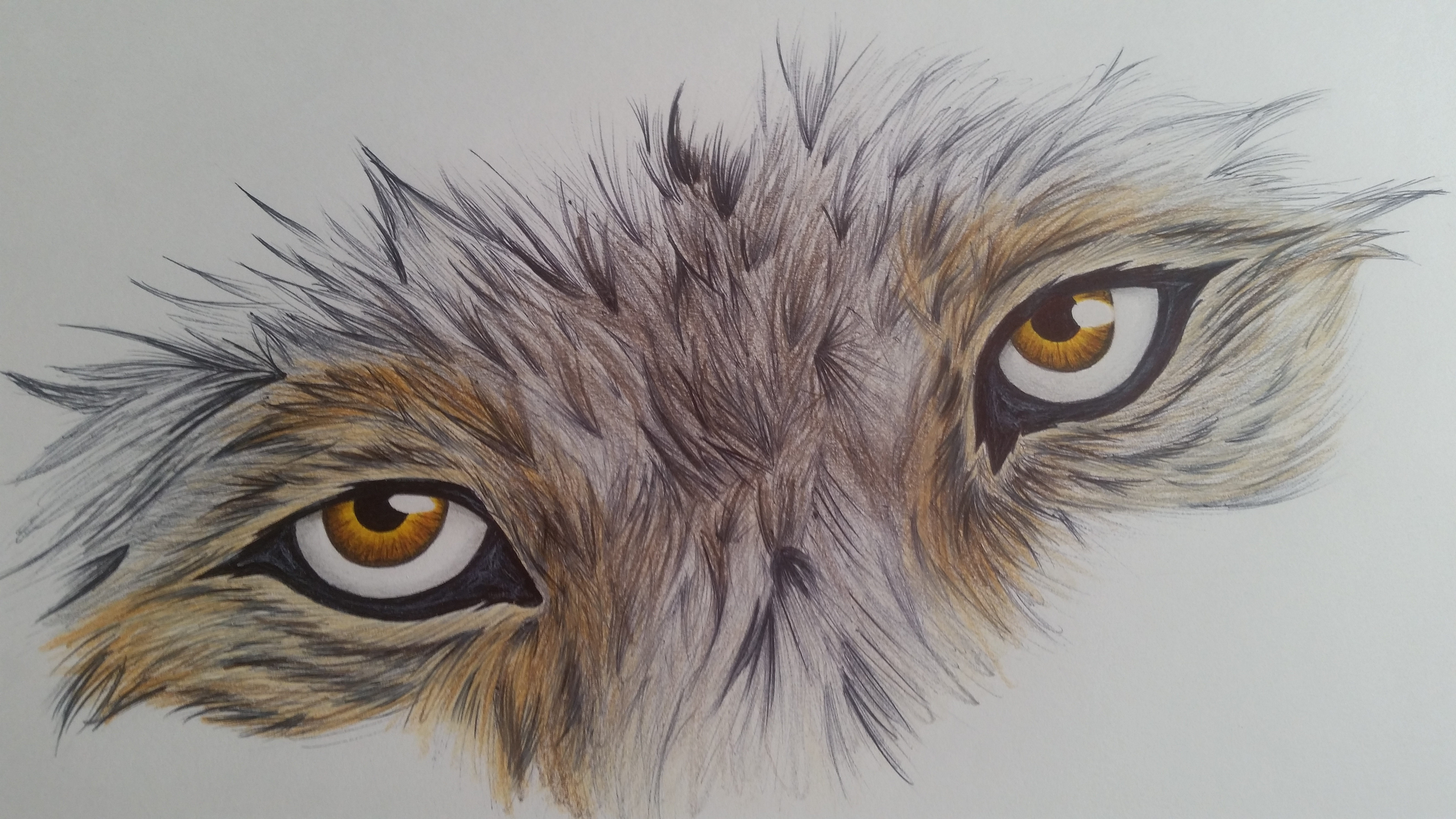 Drawing Wolf Eyes