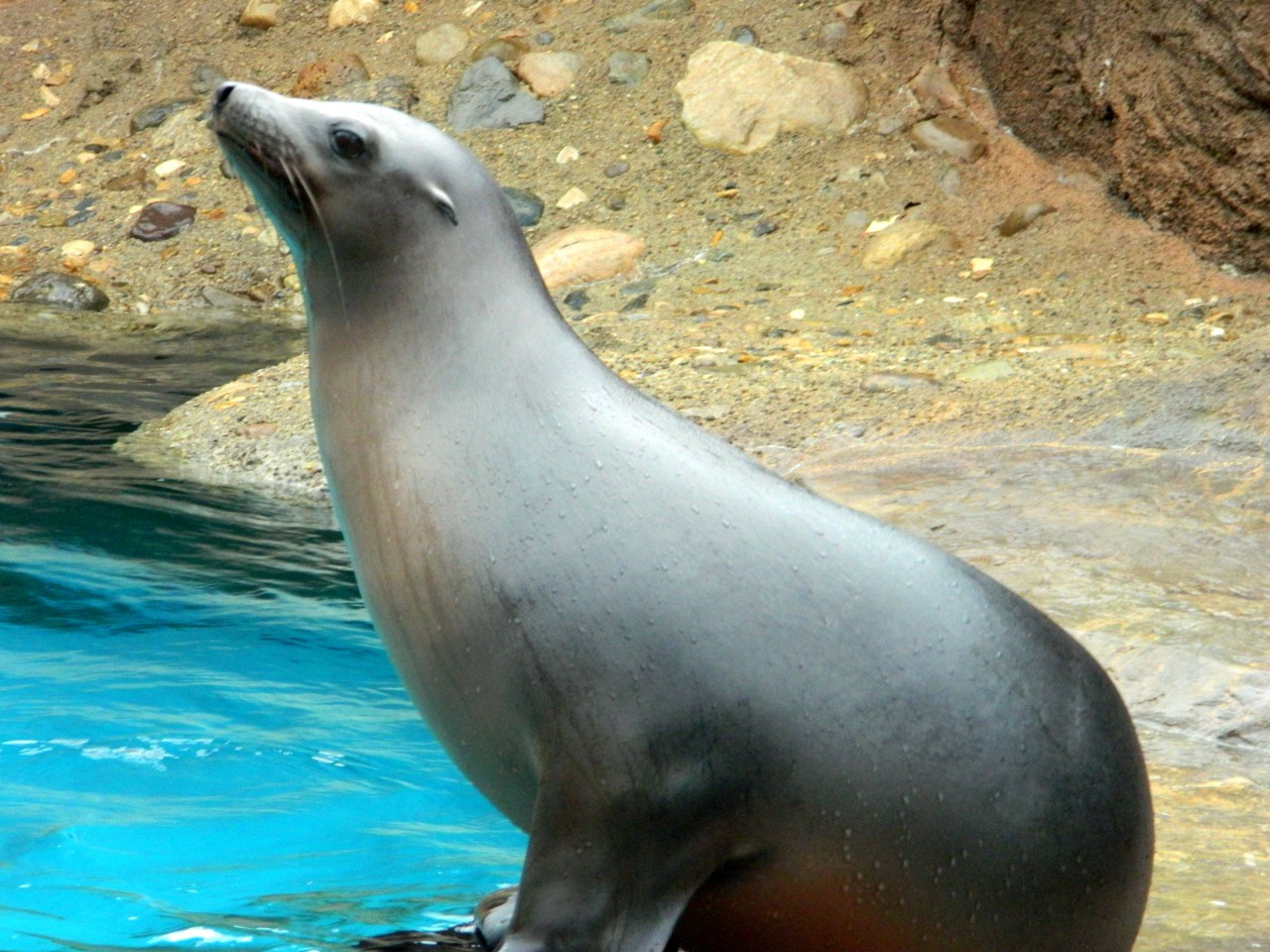 This Seal Is Judging You