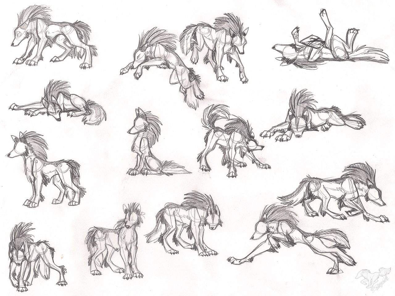 wolf front poses - HD1280×960