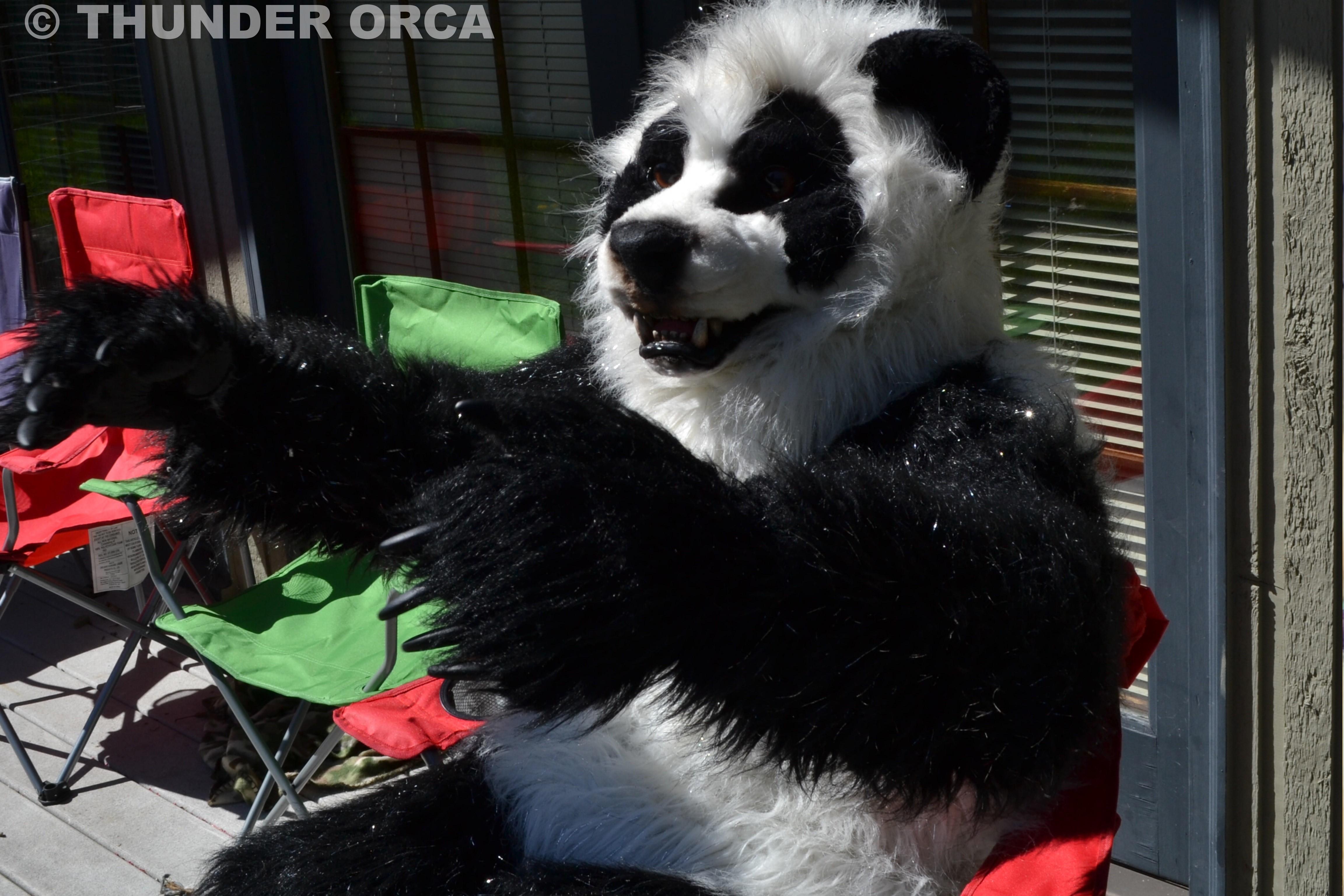 Fursuit Panda my panda fursuit. ^_^ (part 3) — weasyl