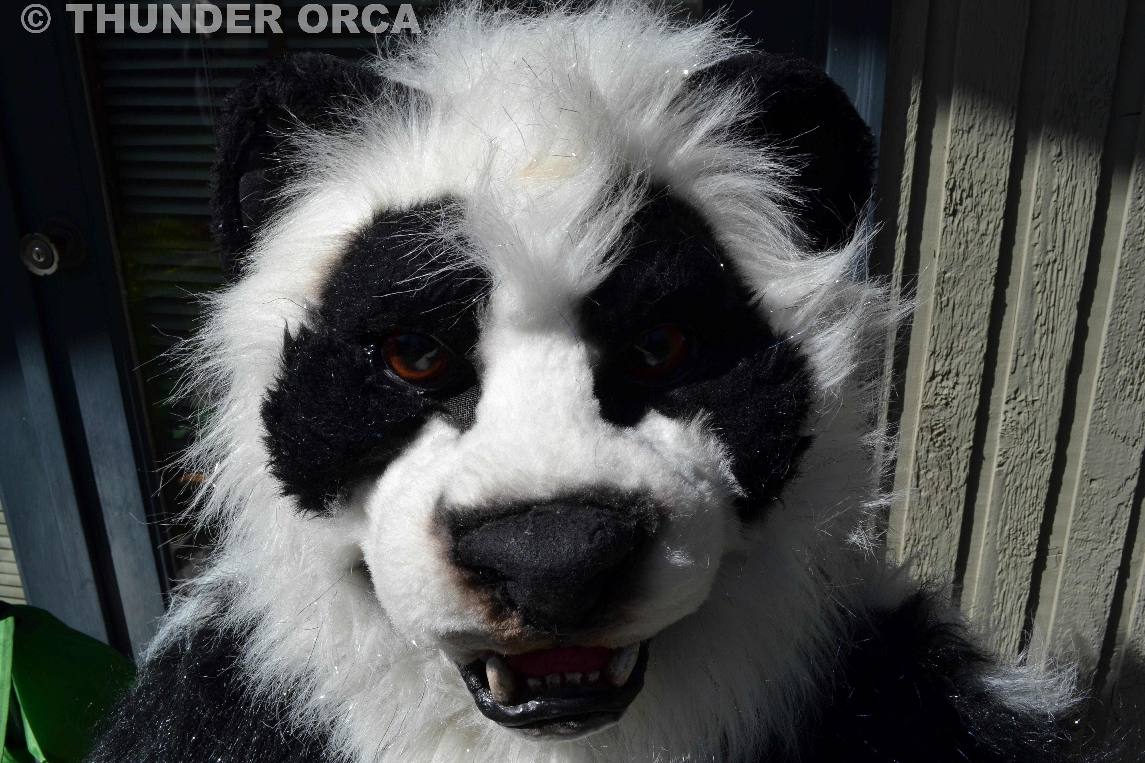Fursuit Panda my panda fursuit. ^_^ (part 8) — weasyl