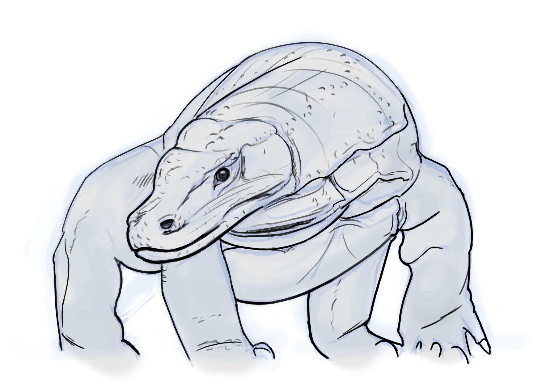 Sketching Lines Komodo Dragon '�  Weasyl How To Draw A Komodo Dragon  Solution For How