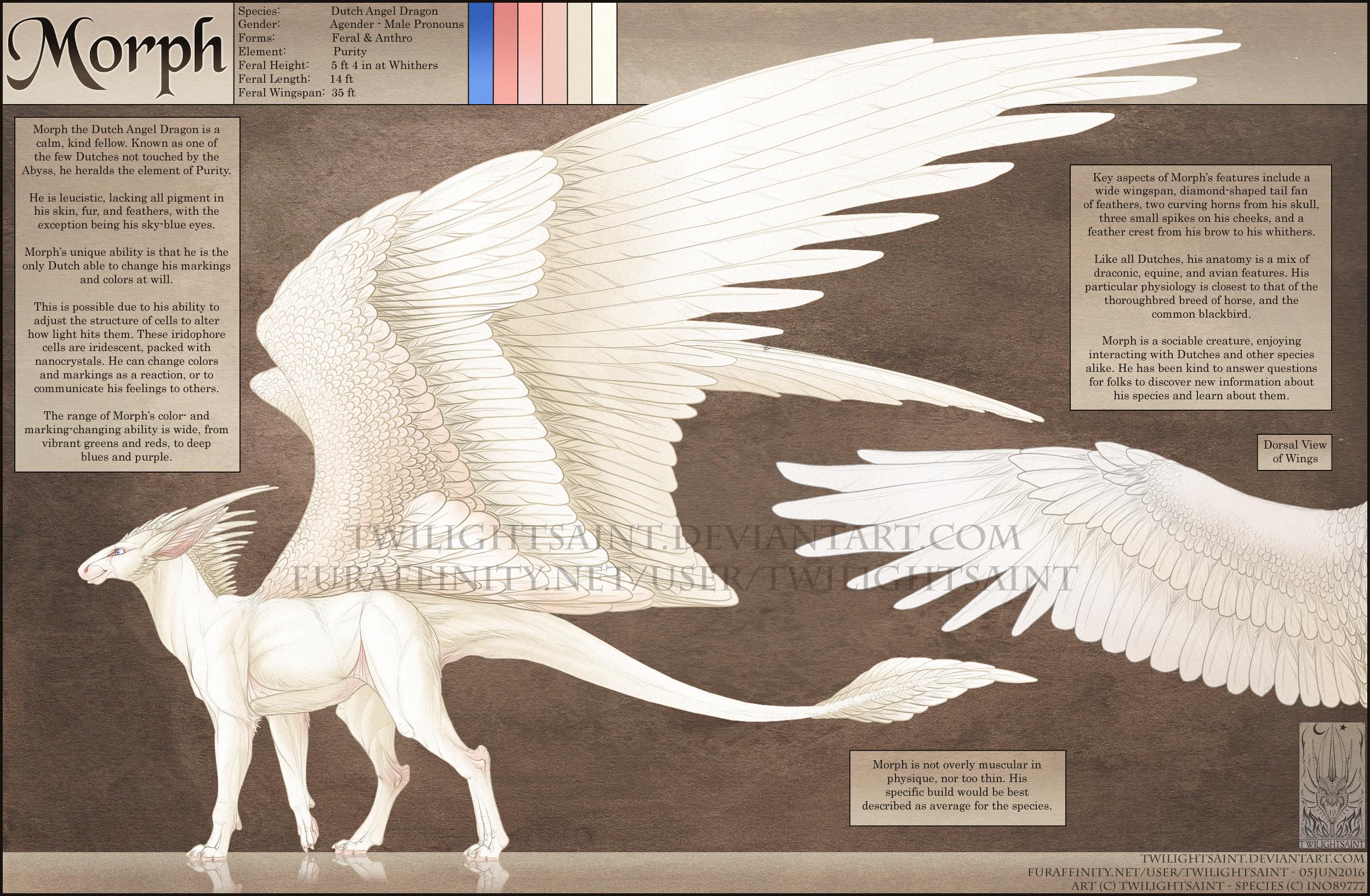 Reference - Dutch Angel Dragon Anatomy — Weasyl