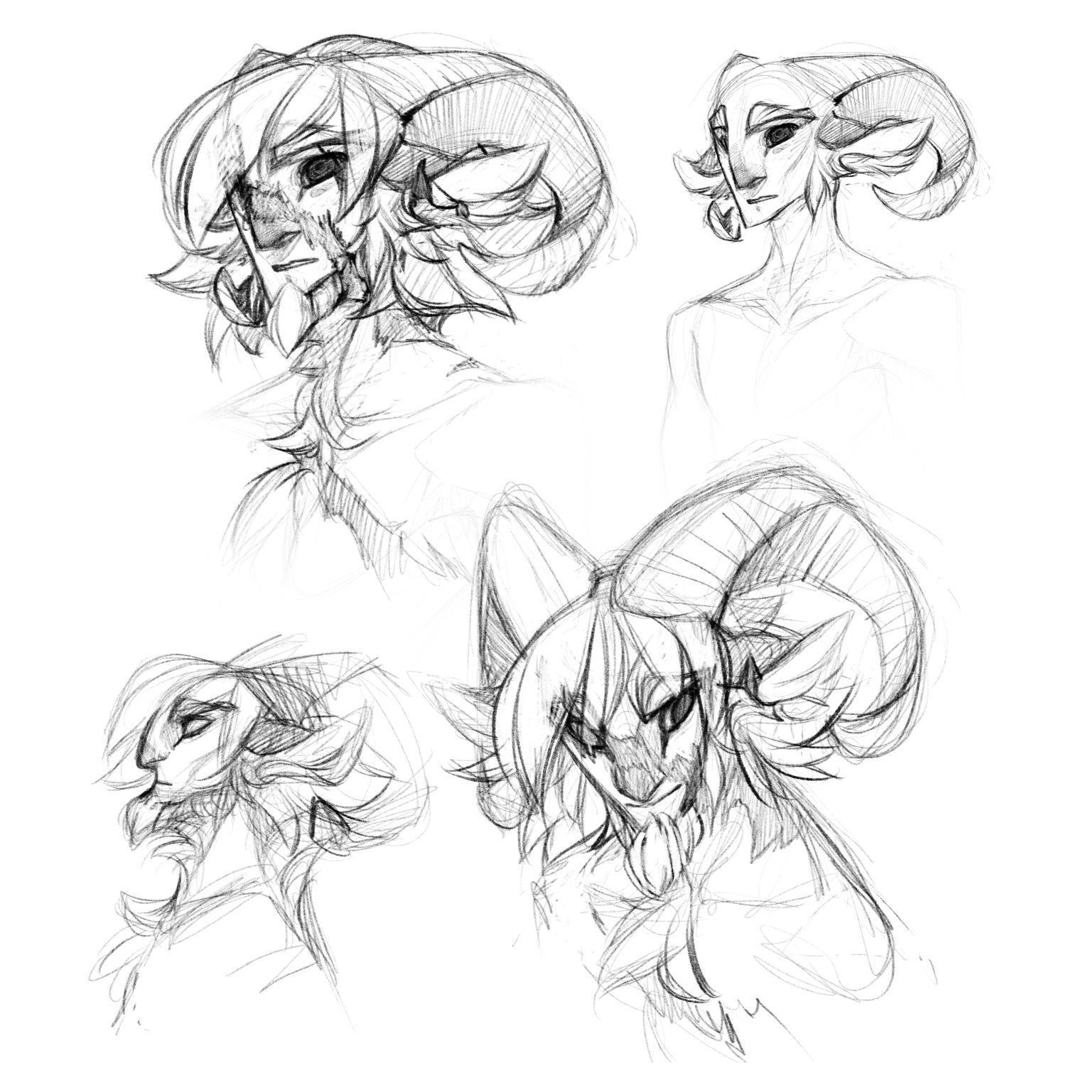 baylian head reference sketches weasyl